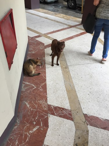 The dog (laying) who lives outside the entrance