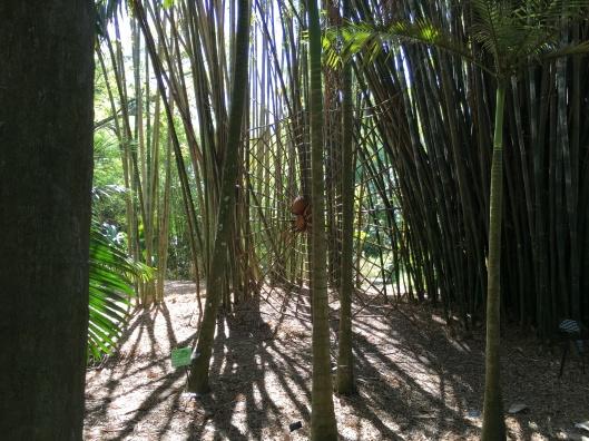 Leu Gardens 010