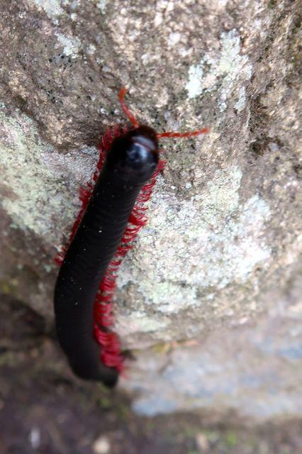bugs-of-peru-04