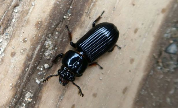 bugs-of-peru-05