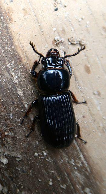 bugs-of-peru-06
