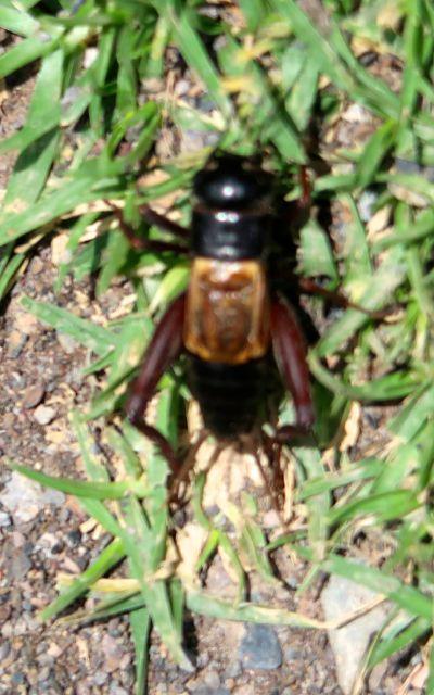 bugs-of-peru-09