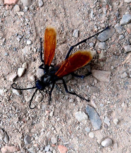 bugs-of-peru-10